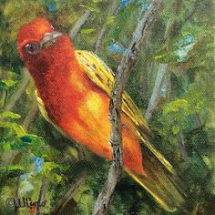Artists Of Texas Contemporary Paintings and Art: Summer Tanager by Wanda Caro