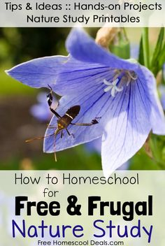How to Homeschool for Free and Frugal: Nature Study Resource List!  TIPS & IDEAS:: Hands-on Projects, Nature Study Printables, + More!