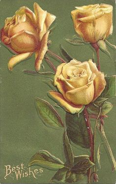 Douglas Yellow Roses Best Wishes Embossed Vintage Postcard PM 1909 #BestWishes
