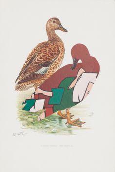 Kolář Jiří (1914–2002) | Gadwall, from the Ornithology of Modern Art cycle | Aukce obrazů, starožitností | Aukční dům Sýpka Modern Art, Rooster, Auction, Collage, Bird, Animals, Animaux, Animales, Roosters