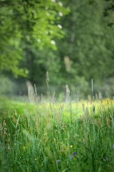 Deep in the meadow 3 by Totte. on Flickr.