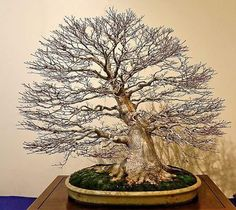 311 best bonsai tree tips images bonsai garden bonsai trees bonsai rh pinterest com