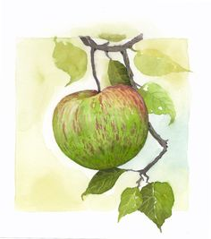Watercolor of an apple, by Jake Marshall.