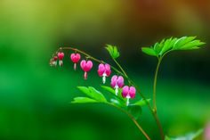 Photo Flower-99 by liqiong chen on 500px