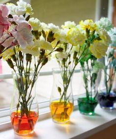 Amazing Home Science Experiments - Color-Changing Carnations