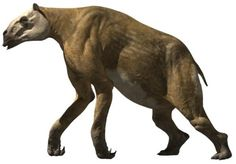 Chalicotherium is a member of the Chalicotheriidae, a bizarre group of animals, which resemble a cross between a horse and a gorilla. This group has much longer front legs than hind, and it is the only ungulate to walk on its knuckles. Chalicotherium stood roughly 8.5 feet at the shoulder, and was able to reach much higher than this into the tree tops via its long arms. Its posture served to protect the large claws on  its hands, which allowed it to easily pull down leaves and branches.
