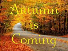 Autumn is coming Fall Winter, Autumn, Timeline Covers, Fall Pictures, Time Of The Year, Fall Crafts, Beautiful Places, Things To Think About, Neon Signs