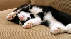 Resultado de imagem para gato preto e branco fofo