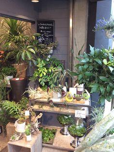 インテリアグリーンと水辺の植物