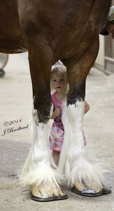 Clydesdale and little girl this is so cute! This will be my kid lol All The Pretty Horses, Beautiful Horses, Animals Beautiful, Cute Animals, Beautiful Creatures, Big Horses, Horse Love, Horse Pictures, Horse Photos