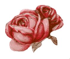 Sweetly Scrapped: Vintage Rose Skin Cream Label