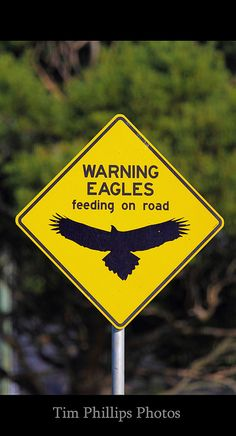 Australia Road Signs Wedge Tailed Eagle