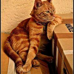 Patience !!! tôt ou tard je recevrai de l'aide pour déménager mes cartons....