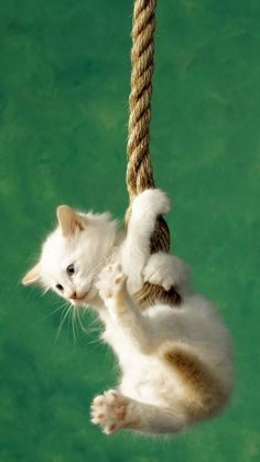 When you're at the end of your rope, tie a knot and hang on!