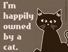 Happily owned by many, many Cats!
