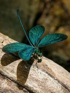 teal dragonfly                                                                                                                                                                                 Más