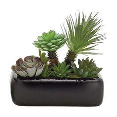 UMA Enterprises Black Faux Succulent Pot (1.710 RUB) ❤ liked on Polyvore featuring home, home decor, floral decor, plants, fillers, flowers, plant fillers, succulent pots, porcelain flower pot and black home decor
