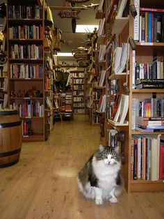 Bookstore Cat, I would definitely buy books from a store that had a resident…