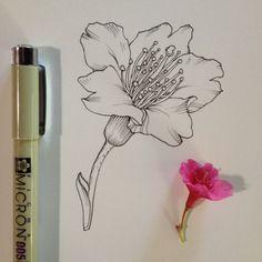 1 bloss