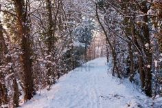 A trail through snowy woods with warm sunset light from the left, and footprints in the snow. The trail is curving to the right. Photo taken in January in England.