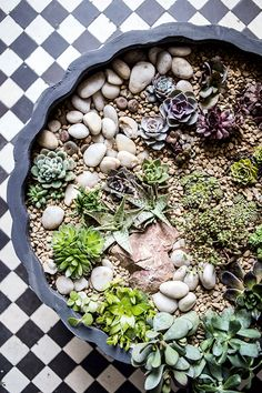 Make a mini garden in a large container.
