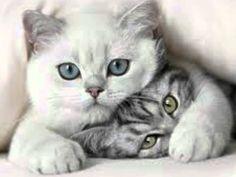 Resultado de imagem para gatinhos bonitos