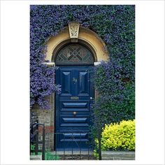 GAP Photos - Garden & Plant Picture Library - Ceanothus trained around blue victorian front door - GAP Photos - Specialising in horticultural photography Victorian Front Doors, Victorian Homes, Entrance Doors, Doorway, Panel Doors, Windows And Doors, Country Landscaping, Plant Pictures, Front Entrances