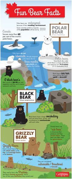 Canada is home to three species of bear, each with their own unique characteristics and habits. Scroll down to learn more about Canada's polar bears, black bears and grizzly bears! To enlarge the infographic, . Bear Facts For Kids, Animal Facts For Kids, Fun Facts About Animals, Animals For Kids, Brown Bear Facts, Polar Bear Facts, Grizzly Bear Facts, Facts About Bears, Fun Facts About Canada