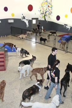 Warehouse and outdoor play must be split! Where dogs go depends on their personality. If they can hold their own, big dog side. If they're more timid/just starting, small dog side (<--Depends) Dog Kennel Designs, Kennel Ideas, Indoor Dog Park, Socializing Dogs, Happy Paw, Dog Playground, Dog Spaces, Pet Hotel, Pet Resort