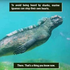 """39 Freaky Animal Facts That Are Probably New To You - Funny memes that """"GET IT"""" and want you to too. Get the latest funniest memes and keep up what is going on in the meme-o-sphere. Wow Facts, Wtf Fun Facts, Funny Facts, Funny Memes, Crazy Facts, Funniest Memes, Cool Random Facts, Bizarre Facts, Weird Animal Facts"""