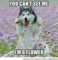 Can't see me, I'm a flower. #cute #adorable #dog