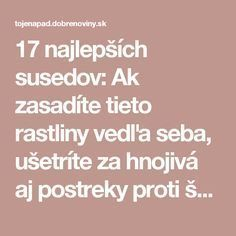 17 najlepších susedov: Ak zasadíte tieto rastliny vedľa seba, ušetríte za hnojivá aj postreky proti škodcom! Flora, Home And Garden, Gardening, Vegetables, Garden Ideas, Composters, Garten, Balcony, Vegetable Recipes