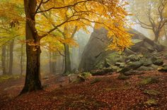 Autumn Forest | Autumn forest Photography by Daniel Rericha