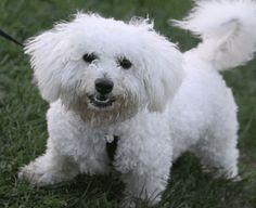 Understanding Dog Counterconditioning