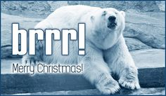Brrrr!  Merry Christmas! Christmas Music, Merry Christmas, Xmas, Christmas Ecards, Online Greeting Cards, Polar Bear, Funny Quotes, Santa, Christian