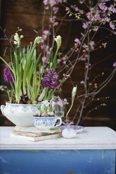 Soup tureen with hyacinths, white tulip in a porcelain candlestick and scillas in a tea cup.