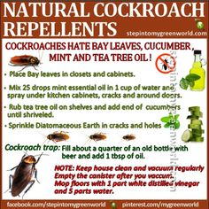 Natural Cockroach Repellents