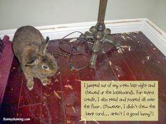 Bunny Shaming: Wild Night