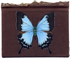 Butterflies on Books – English Muse