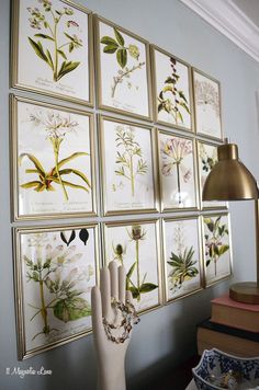 DIY Inexpensive Botanical Gallery Wall