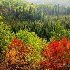 Russia and the republics are mainly covered by coniferous forests