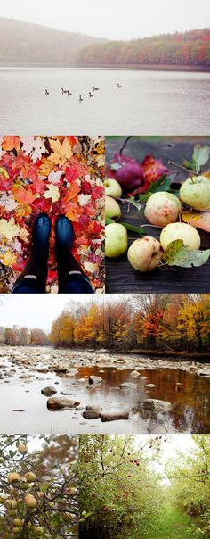 Cannelle et Vanille: The autumn light and colors of Vermont