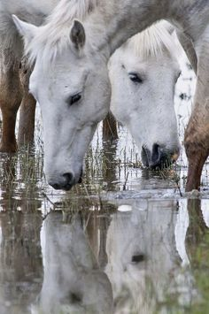 horses in the water....neat pic