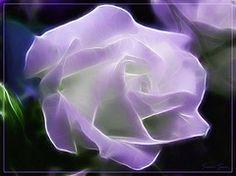 Ethereal / Etrica 2 (Susie Sun 2011) Tags: rose rosa ethereal artedigital digitalartwork pinturadigital digitalartpainting fractalius susiesun etrico