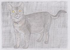 Jake the Abyssinian cat, pencil drawing on paper, Jenny Jump, 2016, art is a form of magic