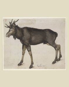 Albrecht Dürer, Elk, 1501-1504. Drawing, pen and ink. Nuremberg, Germany. © The Trustees of the British Museum Design is fine. History is mine.