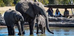 Little Makalolo log-pile hide safari Zimbabwe, Best Games, Elephants, Wilderness, Tea Party, Safari, National Parks, Camping, Animals
