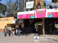 EL MEJOR HOTEL DE MORELIA. El Parque Zoológico Benito Juárez en Michoacán, cuenta con más de 535 especies de animales, además de extensas áreas verdes, zona de juegos infantiles y un lago artificial en donde podrá remar en lancha. En Best Western le invitamos a hospedarse con nosotros en su próxima visita; recuerde que estamos ubicados en la zona centro, a tan sólo 15 minutos de este atractivo parque. #bestwesternplusgranhotelmorelia