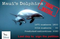 29 October 2014: LAST DAY TO SIGN FOR MAUI'S DOLPHINS!!!  There are less then 24 hours left to sign our petiton to save the last 50 Maui's dolphins from extinction before the big big handover at the New Zealand High Commission in London tomorrow. Please give this one last push and SHARE, SHARE, SHARE and TWEET, TWEET, TWEET!!! Extinction is forever ... Thank you!