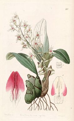 eria | Eria - Wikipédia